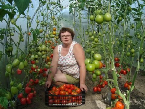 Памятка по формировке томатов!