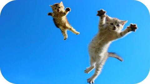 Забавные котики учатся летать!
