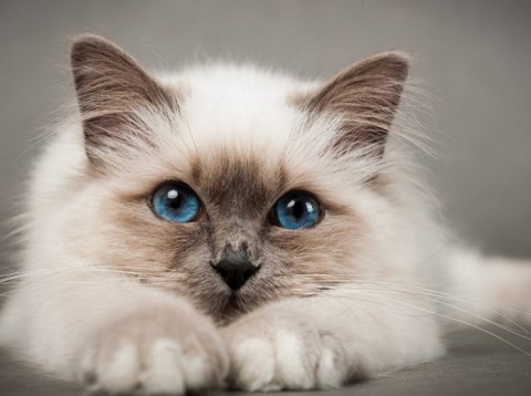 Парень в точности описал котов!