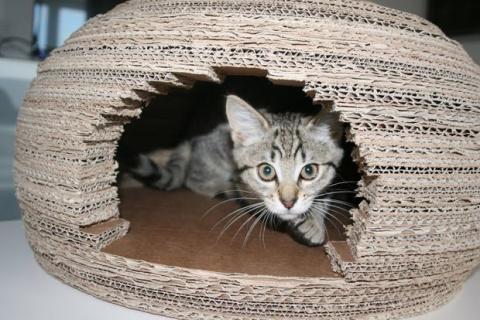 Девушка построила для кошки …