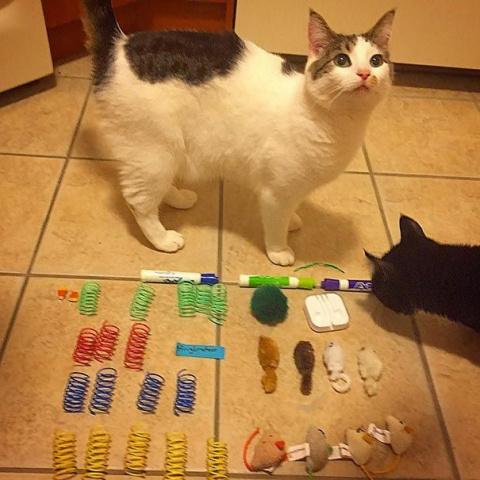 Моя прелесть: 18 котов-вориш…