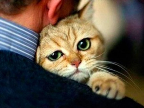 Работа мечты: обнимать котов…