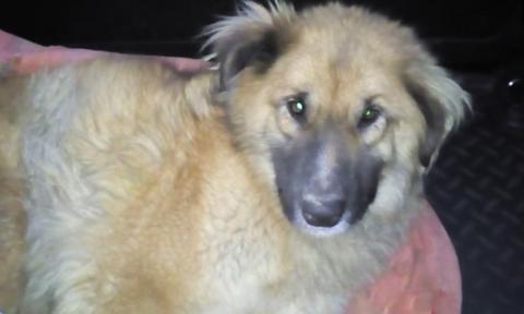Бездомный пёс отгрыз себе лапу, чтобы спастись из охотничьих силков