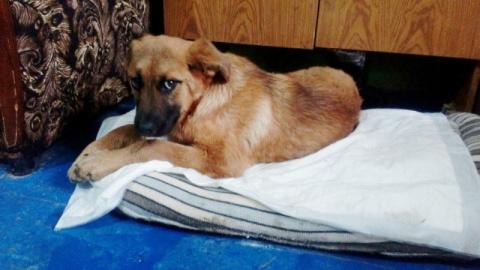 В Новочеркасске молодая пара спасла щенка, которого арматурой избивали живодеры