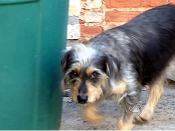 В Бразилии собака спасла тонувшего в баке ребенка