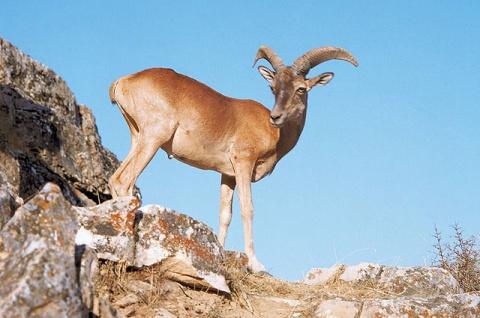 10 исчезающих видов животных