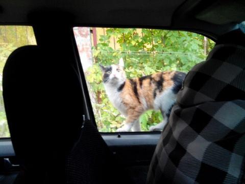 Сидели себе спокойно в машин…