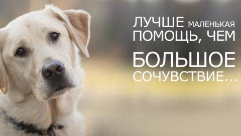 Спасите бездомных животных