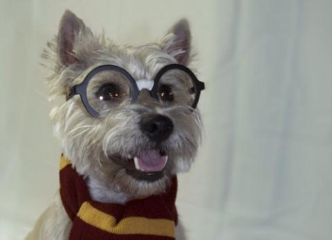Очаровательные собаки, мечтающие стать супергероями