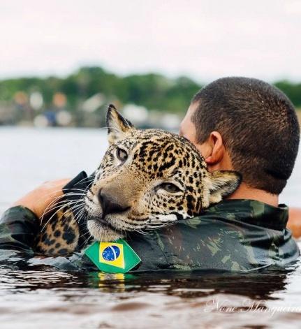 Сын полка — откуда в рядах бразильской армии взялся самый настоящий ягуар