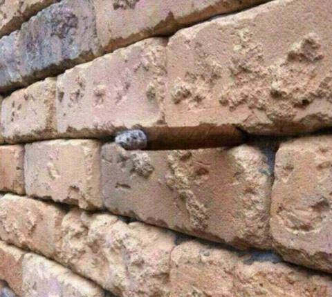 Диковинная оптическая иллюзи…