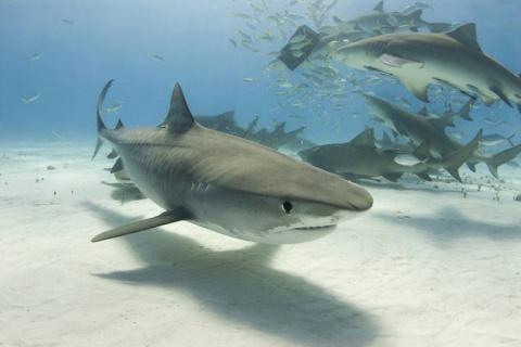 Житель ЮАР сделал кесарево сечение акуле, которую вынесло на пляж