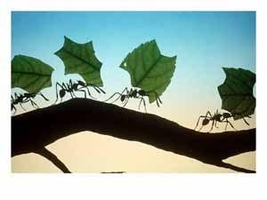 Чему можно научиться у муравьев?