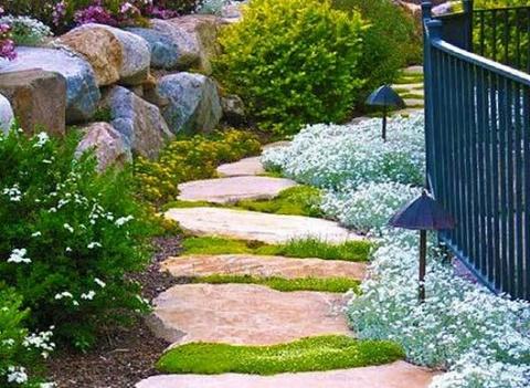 10 идеальных почвопокровных растений для вашего ландшафтного дизайна