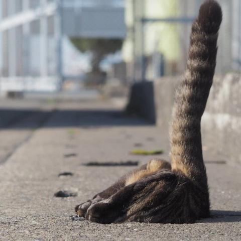 Как развлекаются бездомные коты Японии