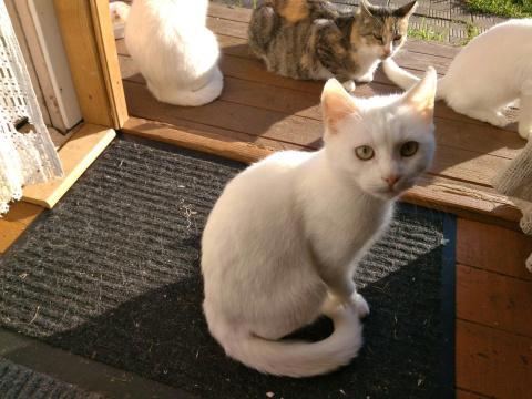 Спасите котят, умоляем!