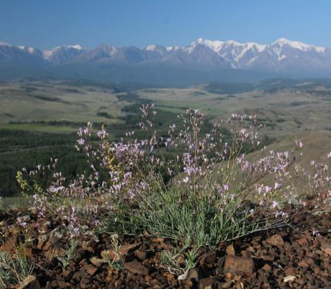 Народная медицина-лучшее средство горы и растения