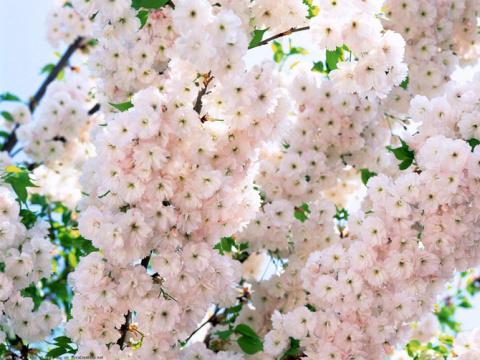 Нежная весна...