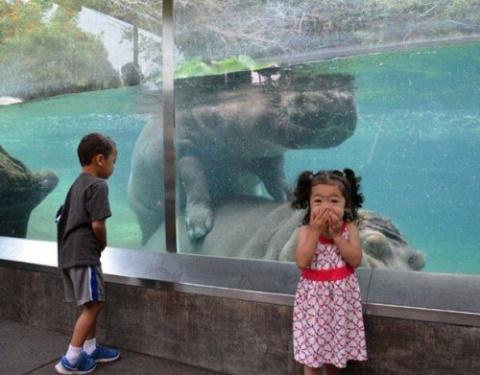 Забавные фотографии из зоопарков