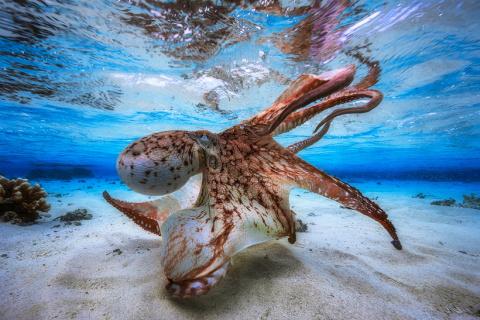 22 лучших фото подводного ми…