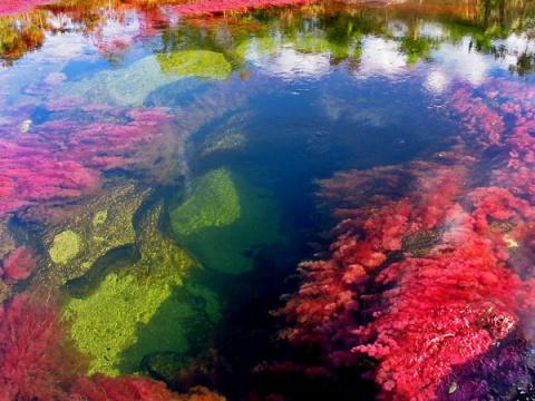 Пятицветная река - Каньо Кристалес