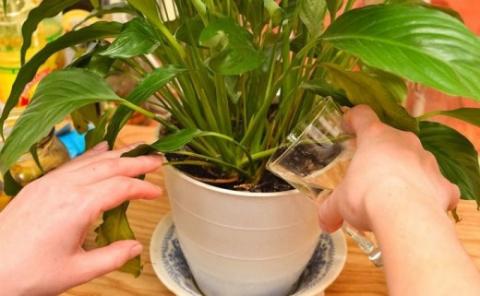 Чудодейственное домашнее средство для растений