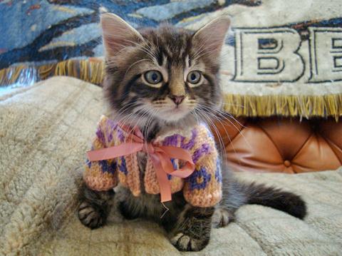Классные свитера для милых животных!