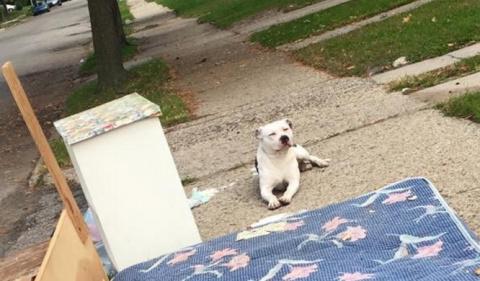 Семья бросила эту собаку вме…