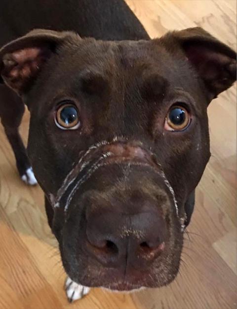 Американца приговорили к пяти годам тюрьмы за жестокое обращение с собакой