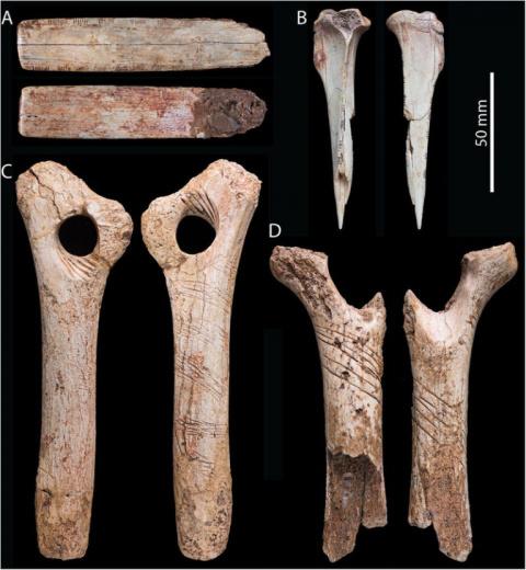 В Британии нашли следы древнего каннибализма