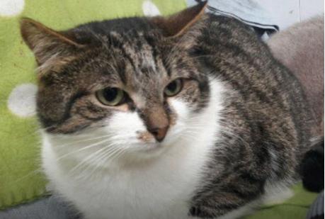 История сбежавшего эрмитажного кота Феодора. Животные, которые представляют опасность для других!