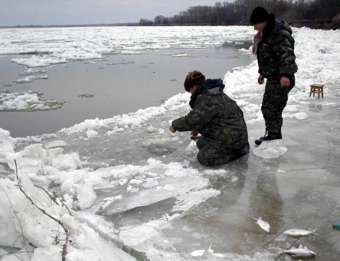 ловится ли сейчас рыба