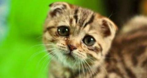Это очень опасный кот!))