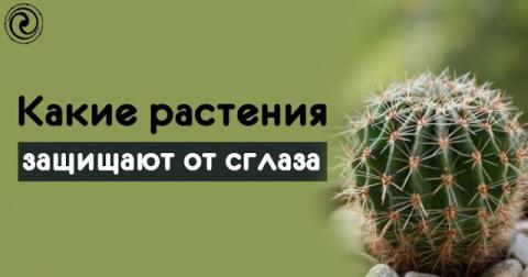 Какие растения защищают от сглаза