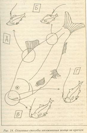 155. Кружки - рыба сходит