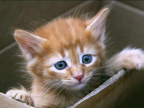 Хозяева приучили кота к когт…