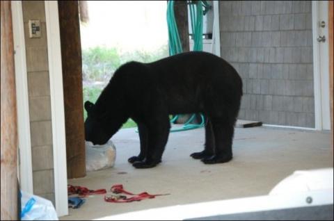 Как спастись от медведя за пару секунд. Урок от шведского охотника