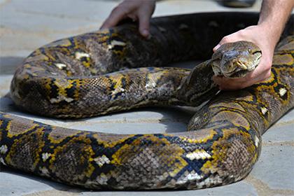 Названа причина исчезновения лап у змей