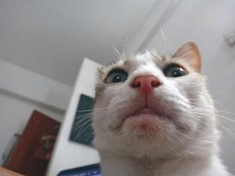 Коты, которые пытаются разбл…