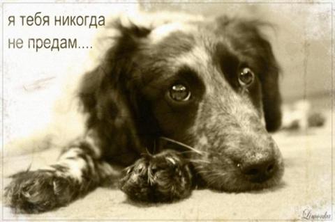 Собачья верность. Они Вас не…