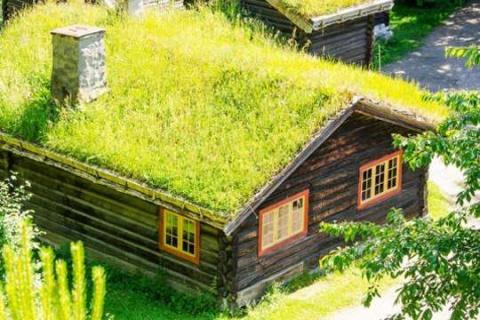 10 растений для зеленой крыши