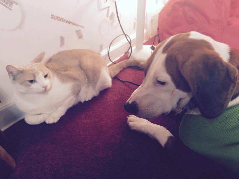 Как спасенная собака завоевала любовь кота