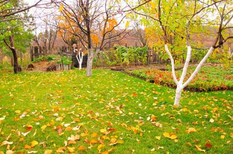 Сезонные работы на даче второй половины октября