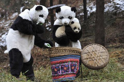 Резерваты гигантской панды в…