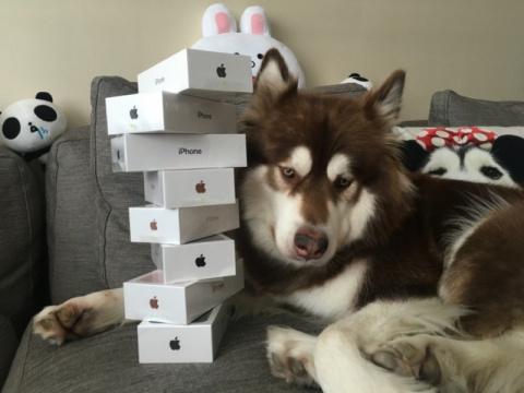 Сын богатейшего жителя Китая подарил своей собаке восемь iPhone 7