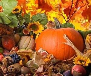 Каким должно быть питание осенью