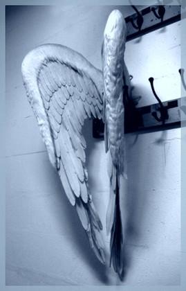 Как трудно быть ангелом...