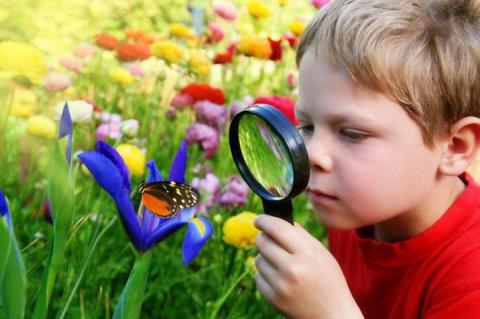 Как избавиться от страха насекомых?