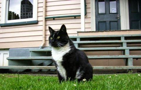 Двойная жизнь хитрого кота… …