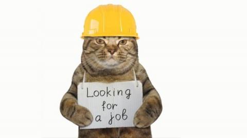 Коты-трудяги и коты-герои